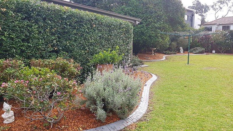 garden after Garden Renovation