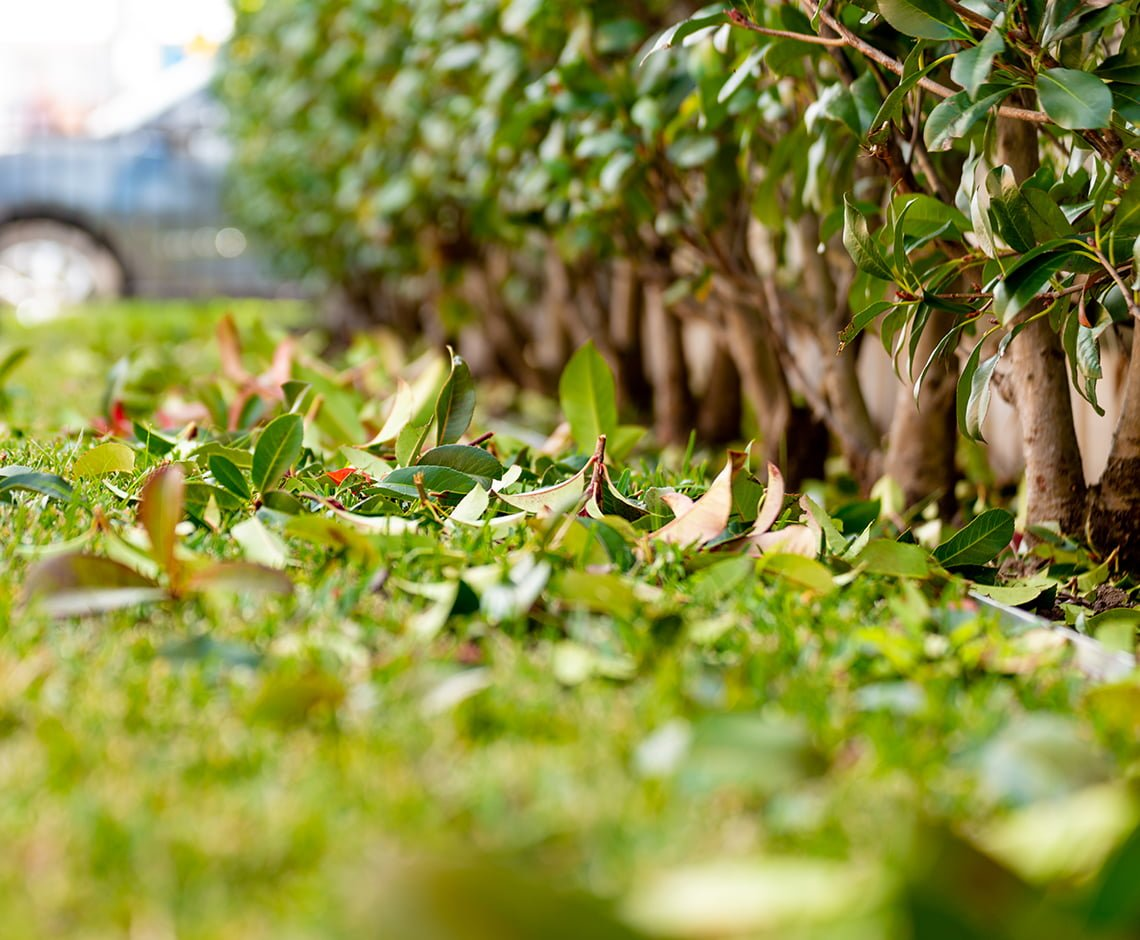 Jungle Gardens doing grounds maintenance in Wollongong region