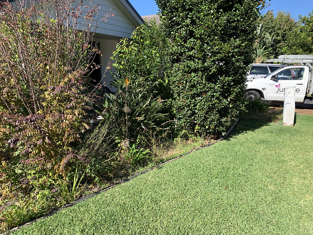 Garden Reno, Edging and Plants Before Image