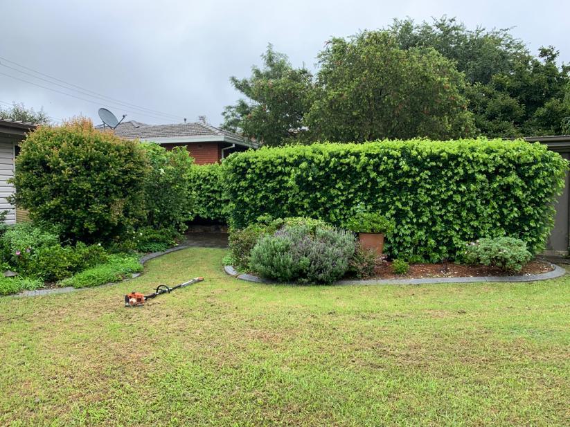 Pruning & Mulching Before Image